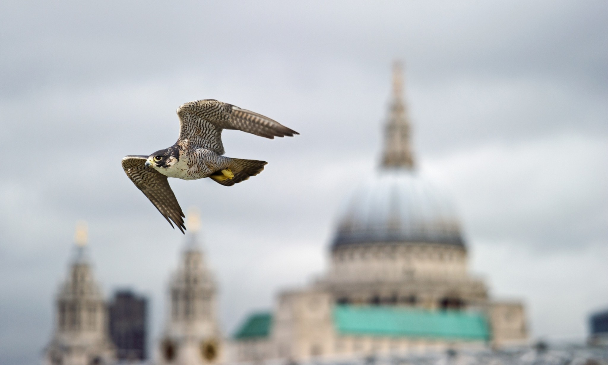 Urban wildlife: when animals go wild in the city