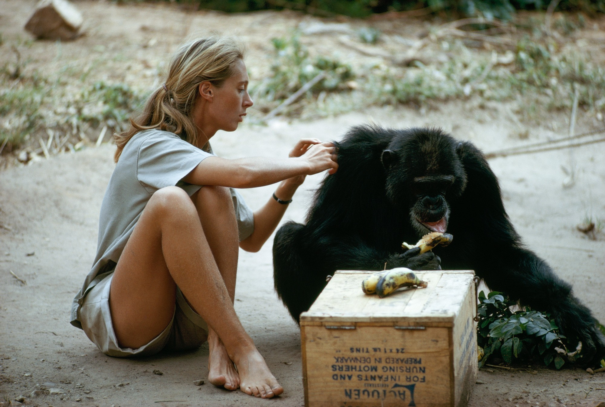 Jane Goodall Wants To Save Us (And Her Beloved Chimps) From Ourselves