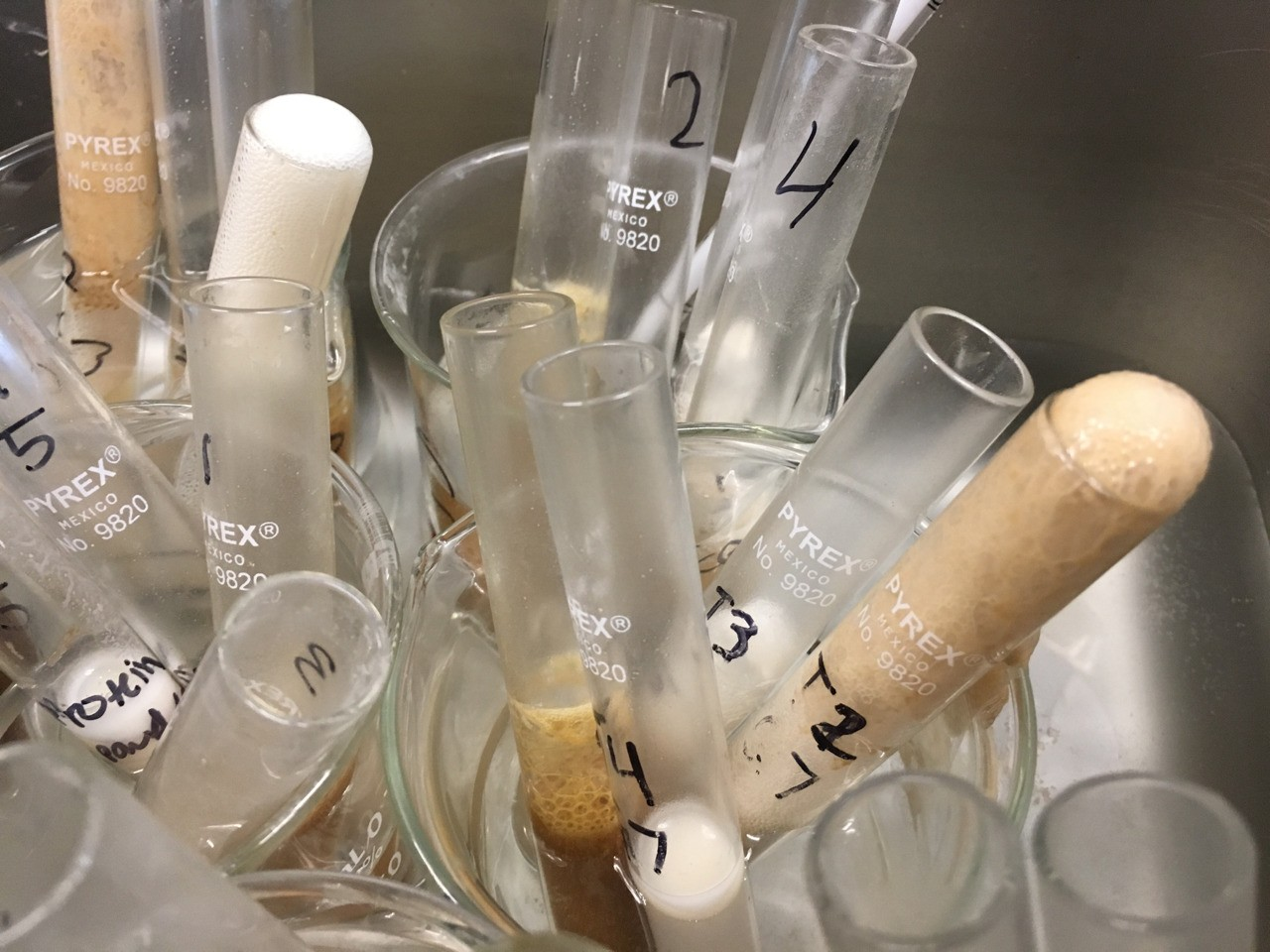 The yeast lab also sparked an interest in me. It made me more and more interested to learn about cellular respiration. It was also very fun.