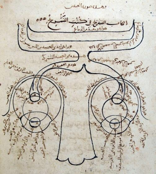 """""""Ibn al-Haytham's Sketch of the Human Optical System. The oldest known drawing of the nervous system from Kitab al-Manazir of Ibn al-Haytham (from a manuscript held in the Süleymaniye Library, Istanbul), in which the eyes and optic nerves are illustrated. It shows a large nose at the bottom, eyes on both side and a hollow optic nerve that flows out of each one towards the back of the brain."""" From www.muslimheritage.com"""