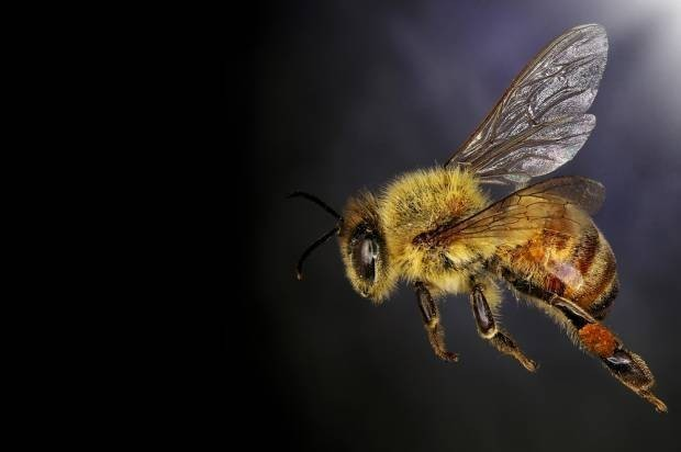 Major victory for the bees: Ontario moves to restrict neonicotinoids