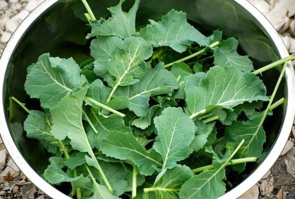 From Broccoli Leaves to Kalettes, New Vegetables to Cook and Grow in 2015