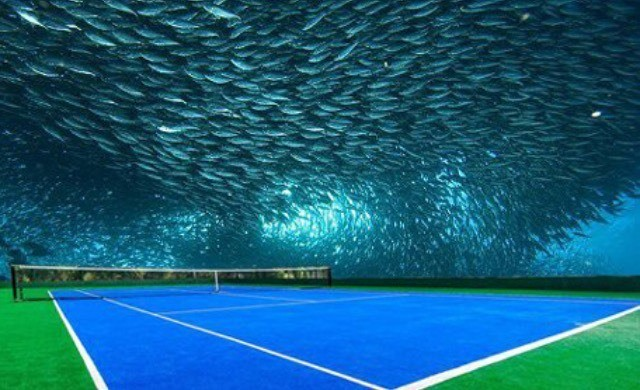 Let's play tennis....... In a dome........ With fish over our head!