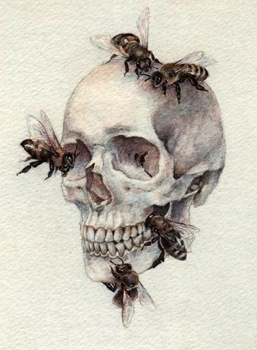 Skulls - cover
