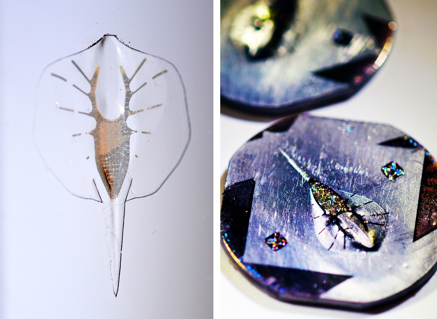 Synthetic Stingray May Lead To A Better Artificial Heart