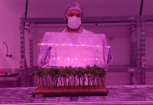 High ambitions: Uruguay cannabis firm targets booming global market for medical marijuana