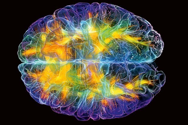 The WIRED guide to the brain in 2016