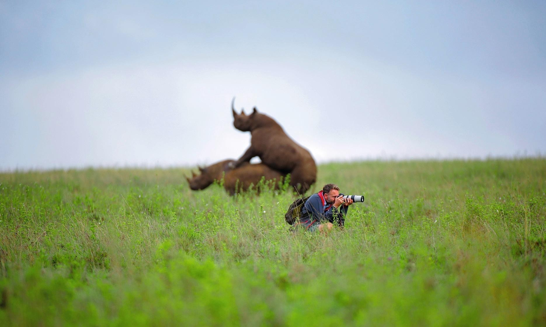Photographer Greg Armfield on how he missed mating rhinos at Nairobi national park