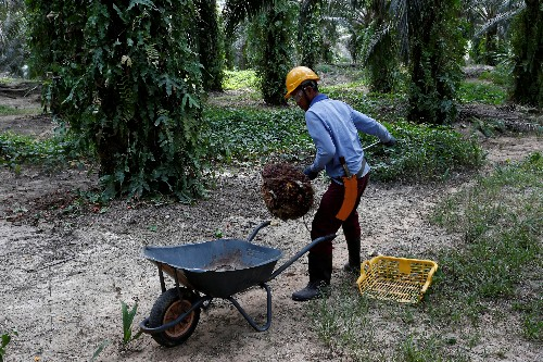 Palm oil rises, high stocks likely limit further gains