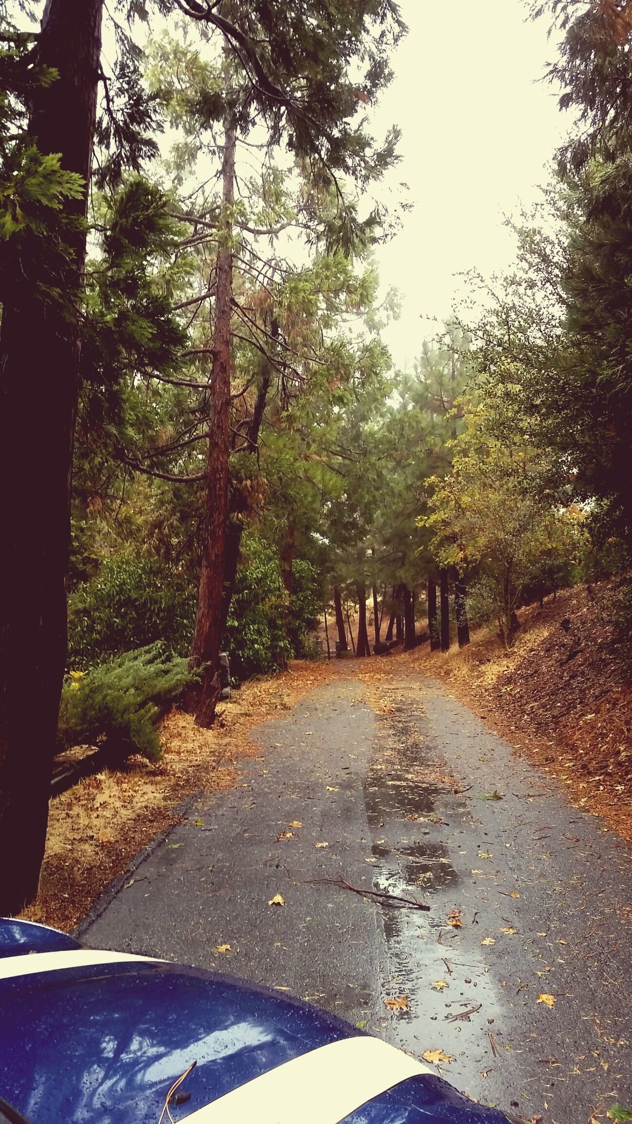 // taken by me in Lake Arrowhead //