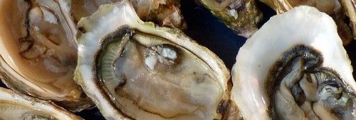 Discarded oyster shells can help us grow food, make cement, and fight climate change