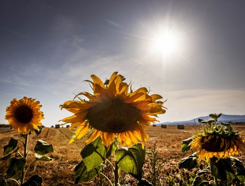 Heatwave Bakes Europe: Pictures