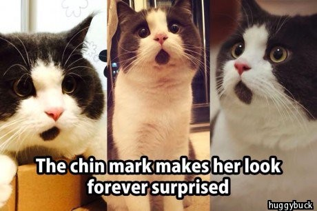 Cat looks surprised because of the black hair on it's mouth makes him look like it's mouth is open
