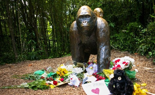 The Week in Review: Controversy Over Gorilla's Death