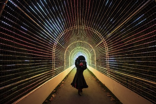 Royal Botanic Gardens Lights Up for the Holidays: Pictures