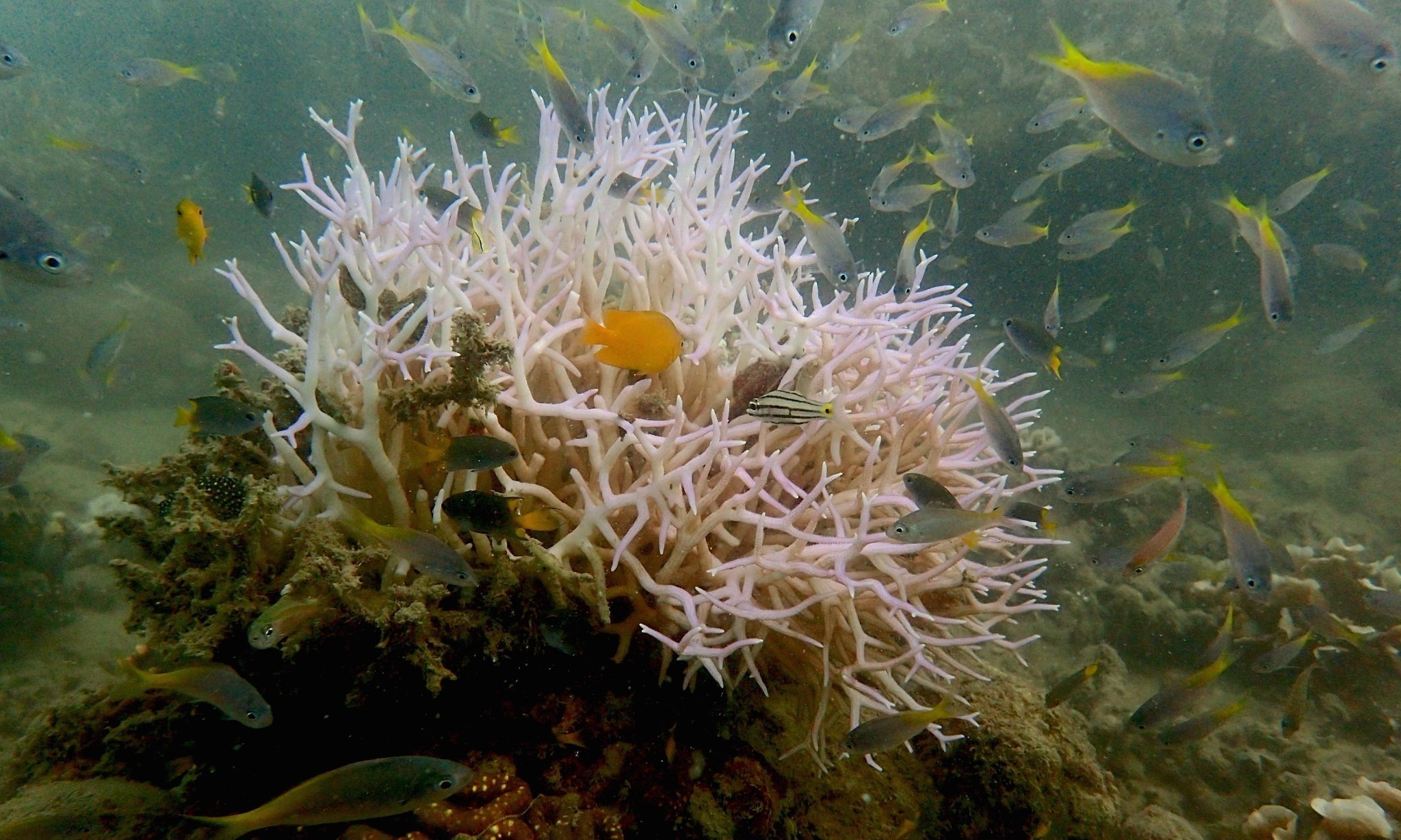 Images of new bleaching on Great Barrier Reef heighten fears of coral death