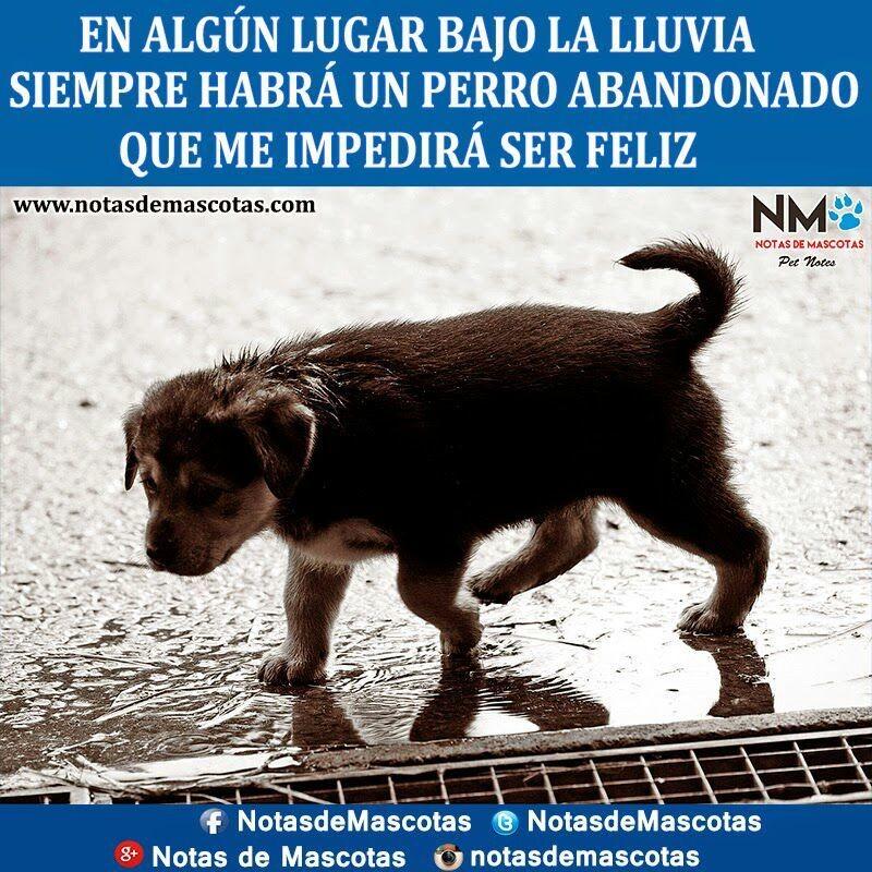 El Perro - Magazine cover