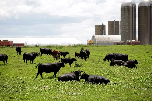 U.S. cows and pigs gorge on bakery rolls, pet food as corn prices surge