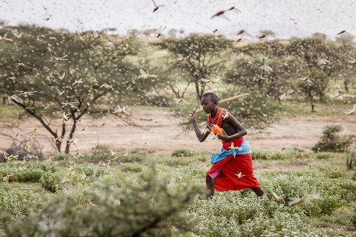 Locust outbreak, most serious in 25 years, hits East Africa