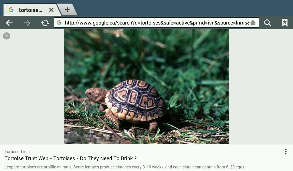 Turtles - Magazine cover