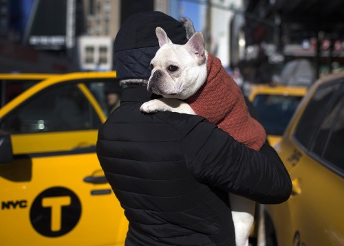 NYC Goes to the Dogs: In Pictures
