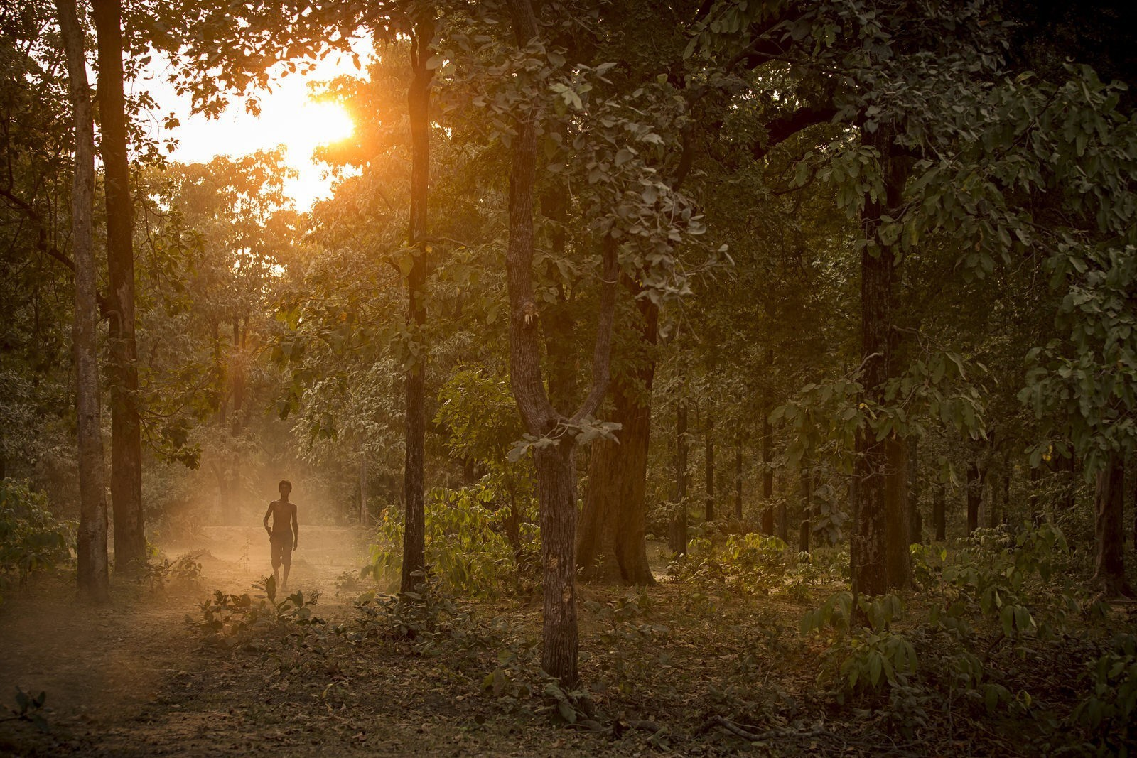 Wild India: step into the real-life Jungle Book