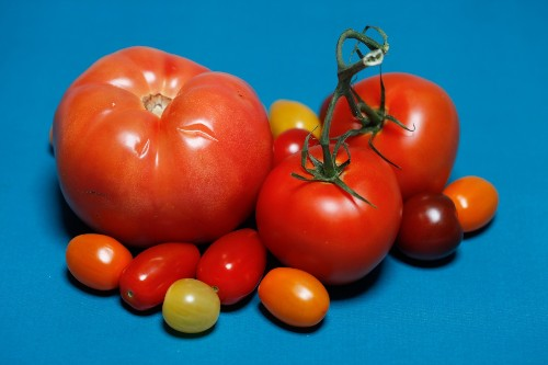 The Search For Tastier Supermarket Tomatoes: A Tale In 3 Acts