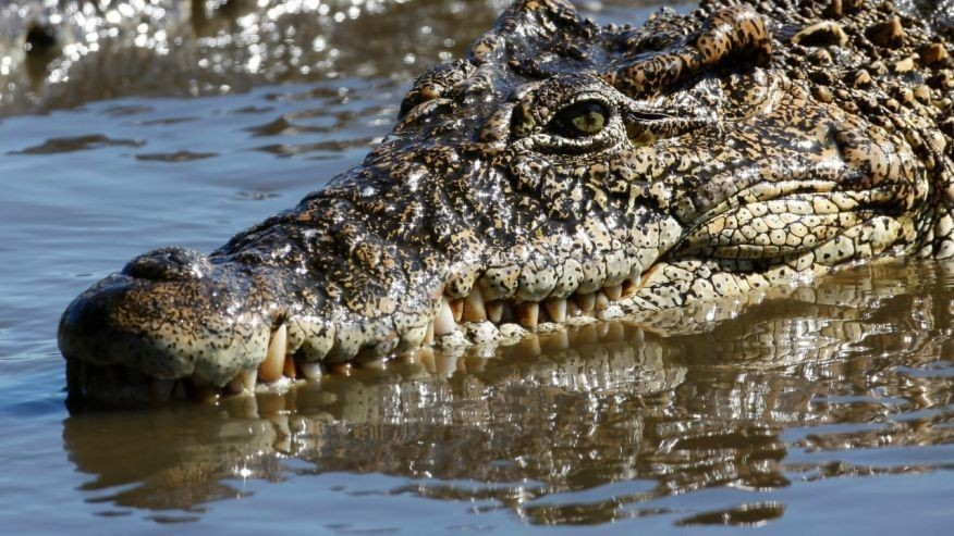 Crocodile stoned to death in horrific attack at Tunisian zoo