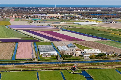 The Gardens of Lisse in Pictures