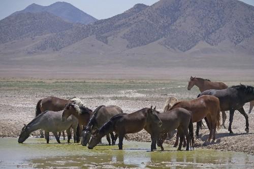 Controversial wild horse plan headed to Senate floor