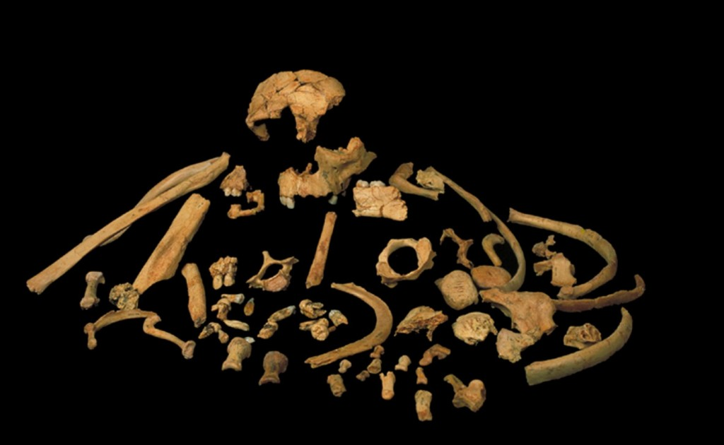 Fossil teeth yield oldest genetic material from extinct human species