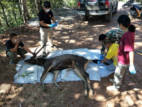 Dead deer found in Thailand with stomach full of plastic waste