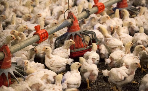 China approves imports of all U.S. poultry, poultry products