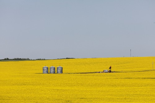 Shut out of China, Canada finds canola buyers in drought-damaged Europe