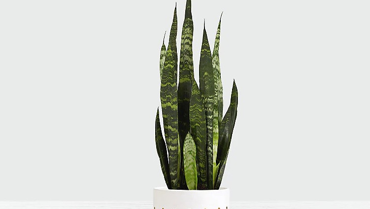 Plants to Liven Up Your Office Space