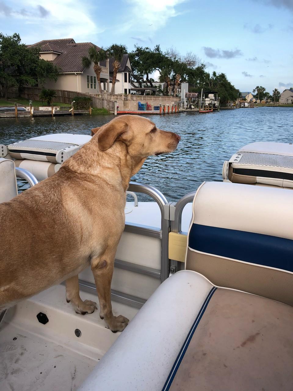 Sassy loves a boat ride. Rockport Tx.