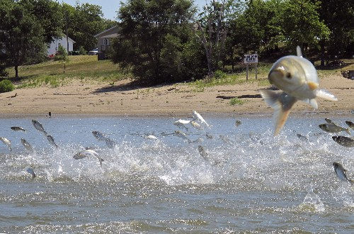 Army Corps approves $778M plan to block Asian carp advance