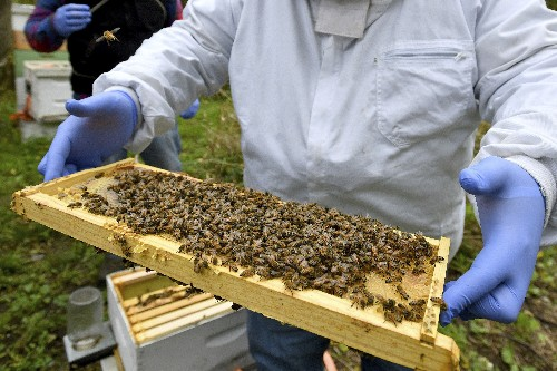 Survey sees biggest US honeybee winter die-off yet
