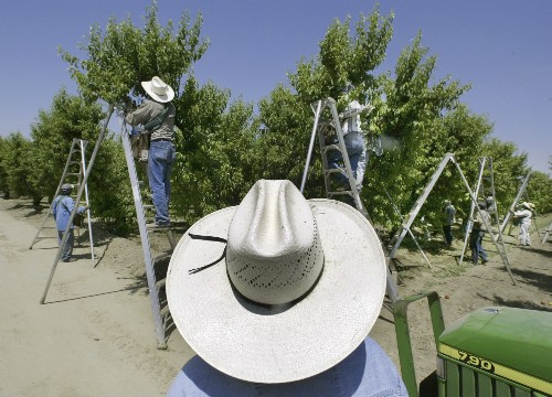 The Latest: President of growers group disappointed by ban