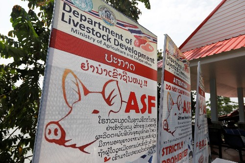 Thailand puts 24 provinces on alert in swine fever watch