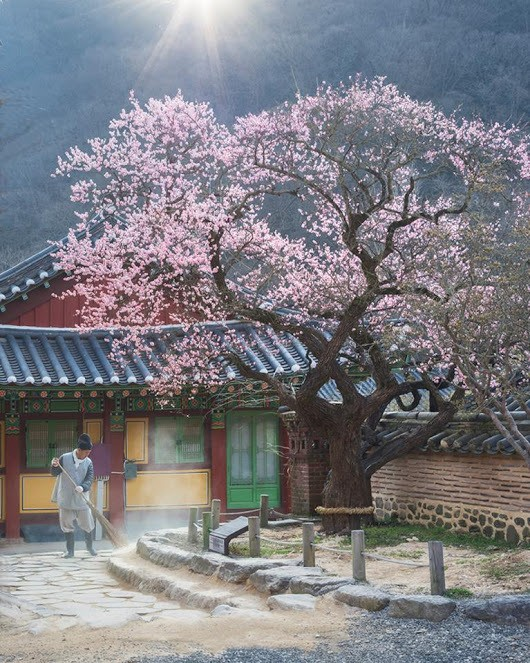 """viola 🌸 """"The scent of spring"""" - Ryu Jae Yun"""