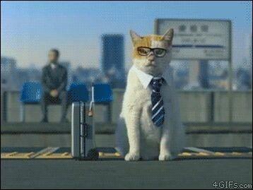 Me encanto este gatito!!