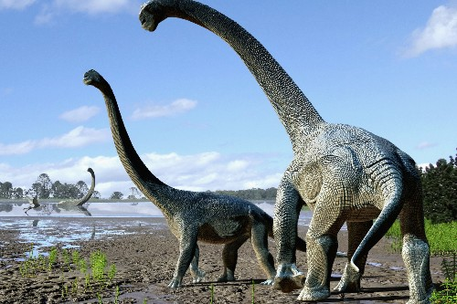 A new dinosaur species has been discovered in Australia