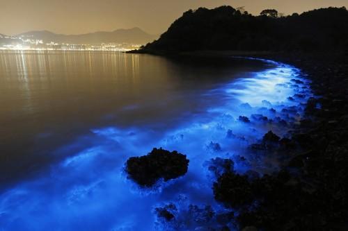 A Bioluminescent Bloom in Hong Kong