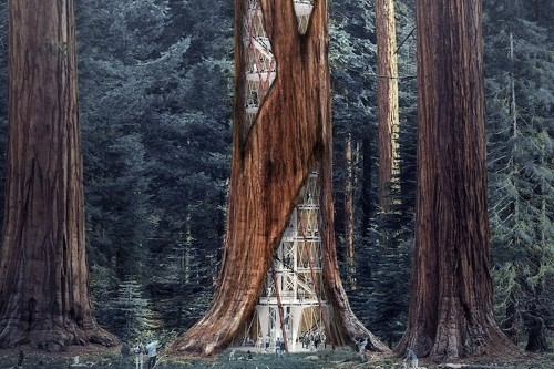 Giant Sequoia Skyscraper Concept Lets You Live in the Trees