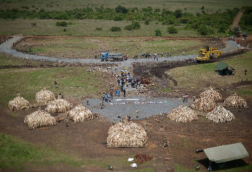 Kenya Sets Ablaze 105 Tons of Ivory
