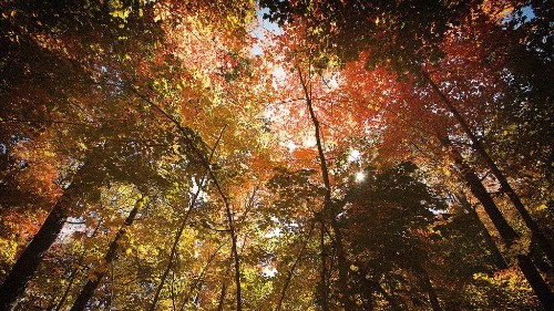 Chase Fall's Best Colors With This Peak Foliage Map