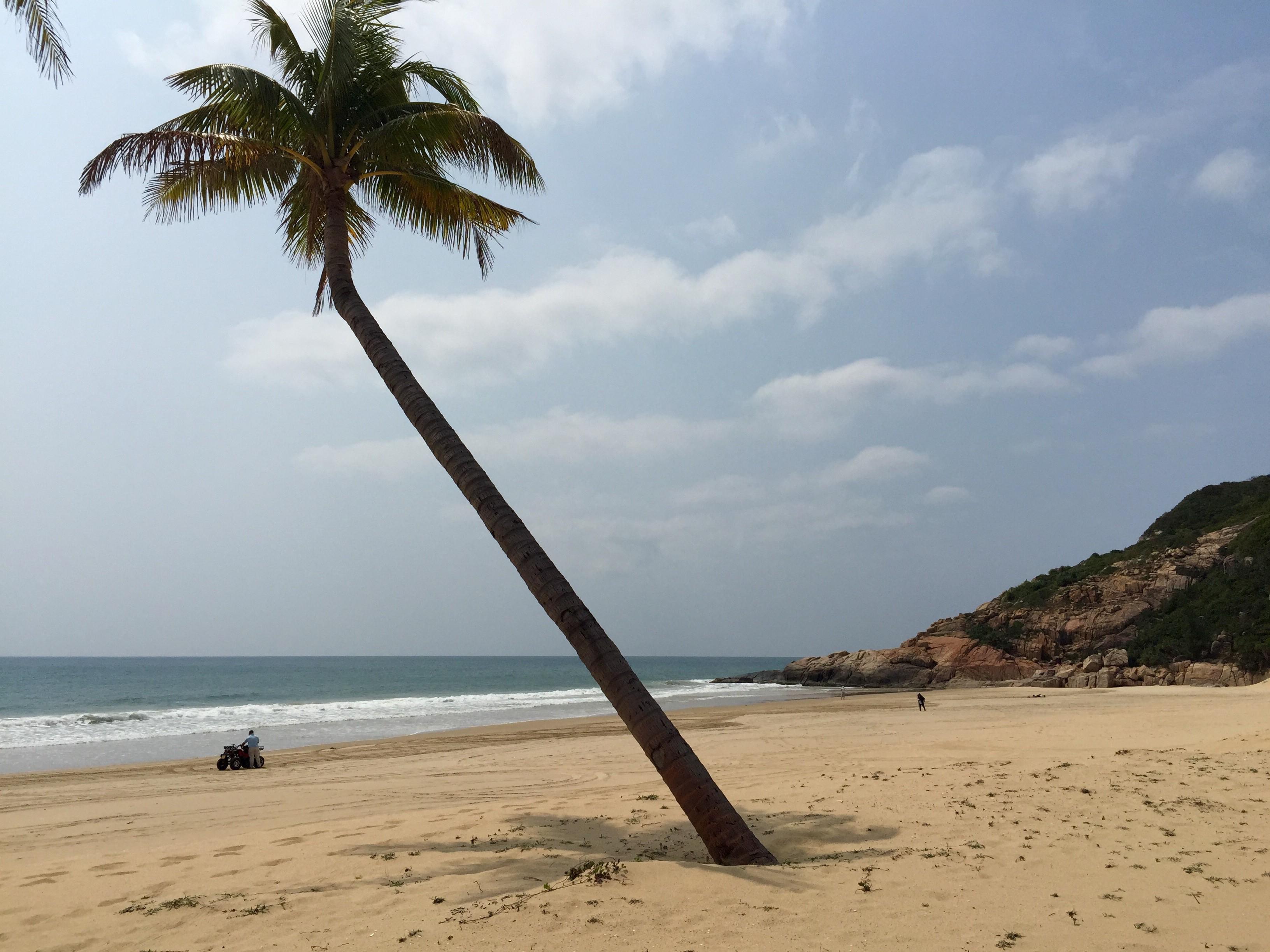 风吹椰树沙沙响