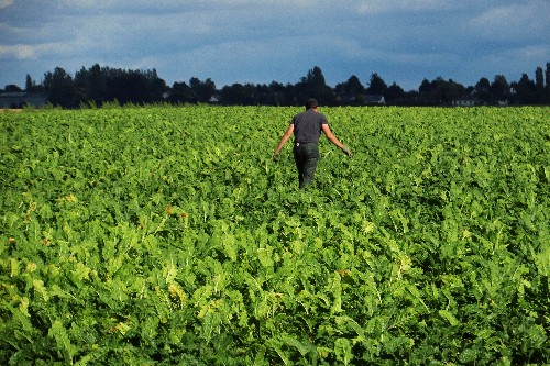 France to ban widely used crop fungicide over health concerns