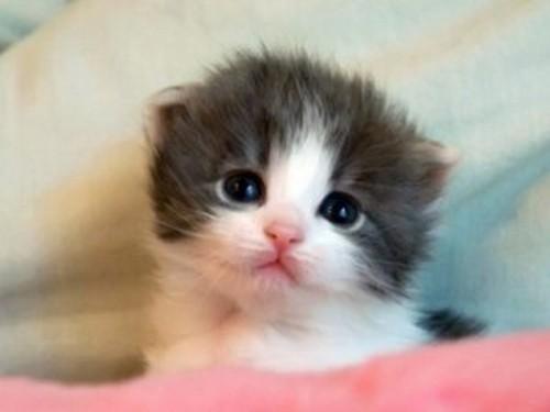 Que hermosoooo, que cosita tan linda, hermosissisimo gatito bebe